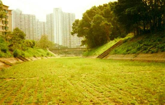 Grasscrete©