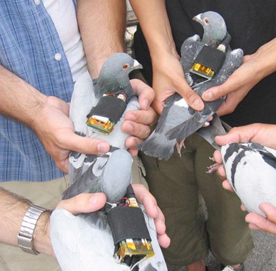 GPS Pigeons