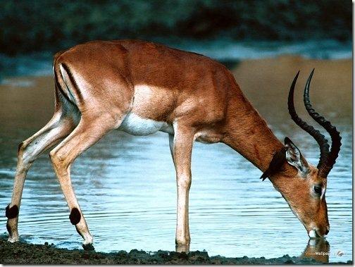 deer_river