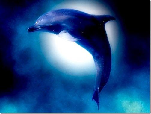 killer whale wallpaper. Killer Whale Breaching