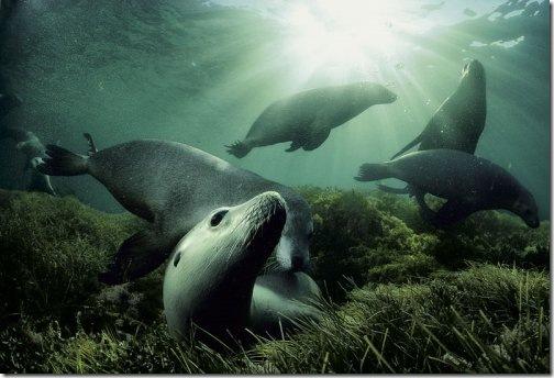 sea_lions