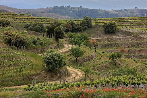 Vinyes DOQ Priorat, antic camí ral de Falset a Gratallops, Gratallops Priorat, Tarragona