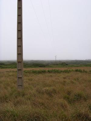 草むらの中の電柱