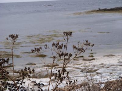 大西洋と植物