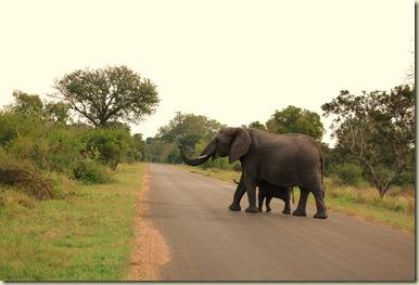 Kruger Park 502