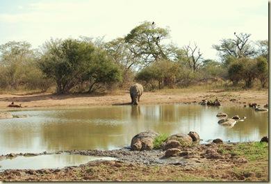 Kruger Park 273