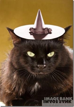 gatos disfrazados (29)