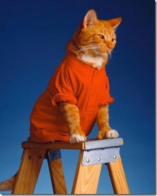 gatos disfrazados (27)