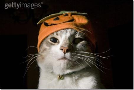 gatos disfrazados (32)