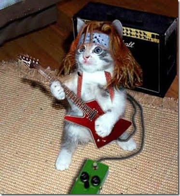 gatos disfrazados (16)