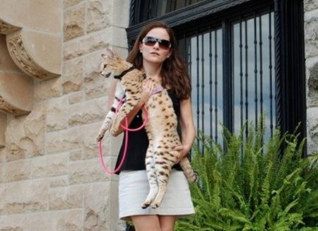 gato miblogdecosasdivertidas (7)
