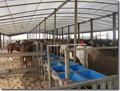 5286 Island Equestrian Center South Padre Island Texas
