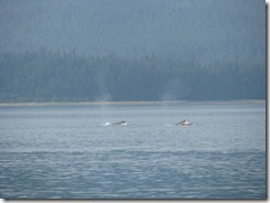 4512 Whale Watching Juneau AK
