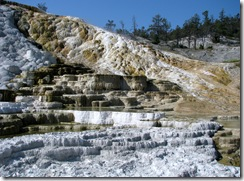 5819 Mammoth Hot Springs Terraces Yellowstone National Park