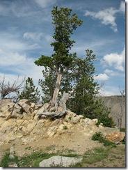 6055 Rock Creek Vista Point Beartooth Scenic Highway