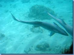 7830 Semi Sub Coral World Charlotte Amalie St Thomas USVI