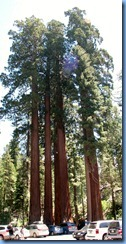 2311 Happy Family General Grant Grove KCNP CA Stitch