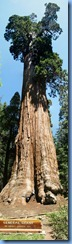 2332 General Grant Tree  General Grant Grove KCNP CA Stitch