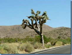 2873 Joshua Tree National Park CA