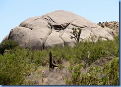 2899 Joshua Tree National Park CA