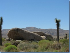 2971 Joshua Tree National Park CA