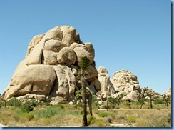 2979 Joshua Tree National Park CA