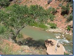 3621 Virgin River Zion National Park UT