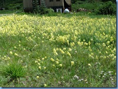 5991 CO-145 San Juan Skyway Scenic Byway Snapdragons CO