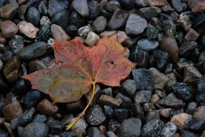 fall leaf, Scotland