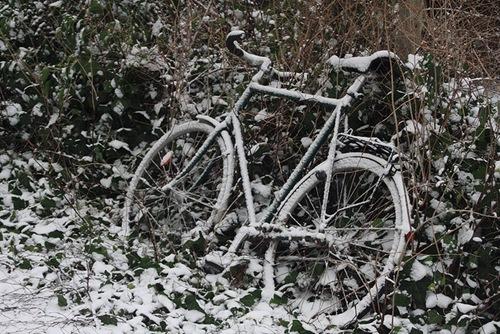IMG_5702_Cykel