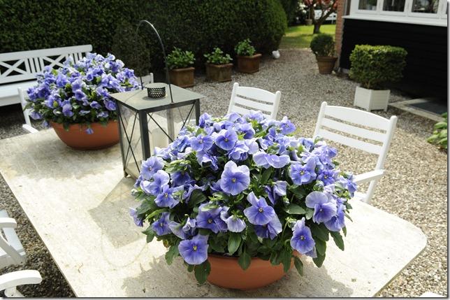 Blomster på bordet   claus dalby   mit haveliv