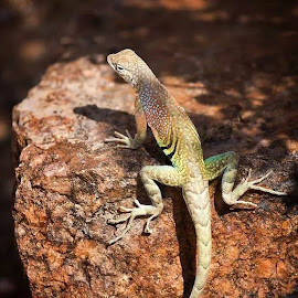 Little guy sunbathing by Daisy Palafox - Animals Reptiles