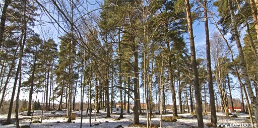 Hårt gallrad skogsdunge