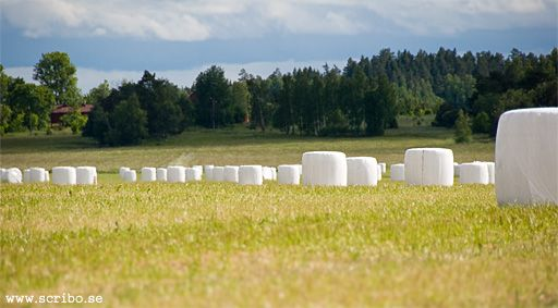 Rundbalar med hsilage dr all midsommarbloster nu ligger.