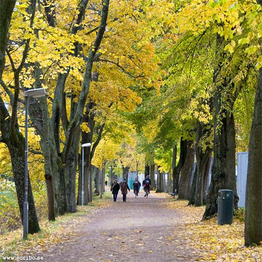 Flusterpromenadens allé vid Stadsträdgården i Uppsala