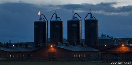 kvällsbild på silorna på Kungsängens gård