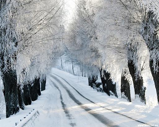 Vinterväg och allé med frostklädda grenar