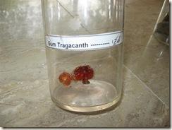gum tragacanth specimen -pharmacology lab
