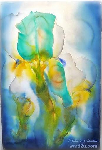 ملامس ملونه على اوراق النباتات والزهور