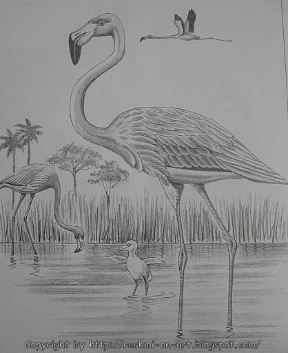 Pencil-Sketch-Flamingo Bird