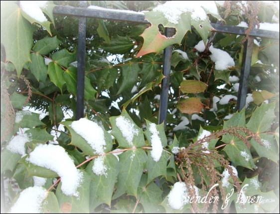 Dec. 26, 2010 - snow 011