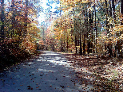 an enjoyable run on a Fall day during lunch in Umstead State Park