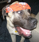 Duke Bandana