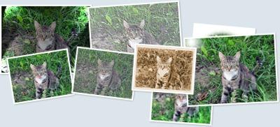 View Fotoalbum Pisica