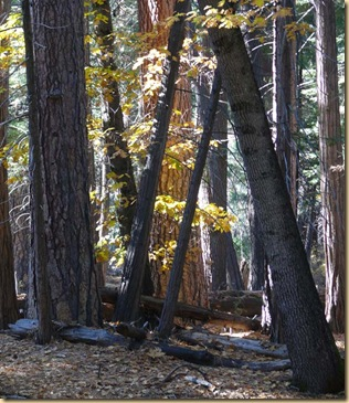 Yosemite Forest View