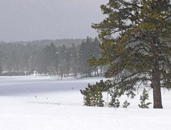 Black Hills Snow