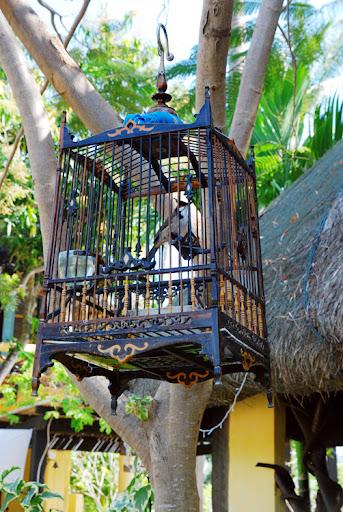 Певчая птица в клетке. Таиланд