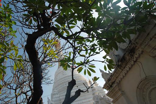 Зеленый и цветущий Чианг Маи