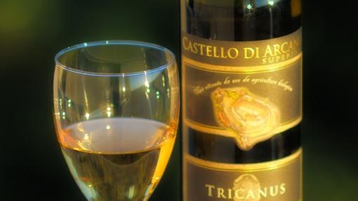 castellodiarcano_tricanus_j