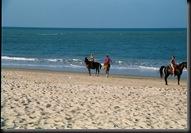 Cucumba - beach horses